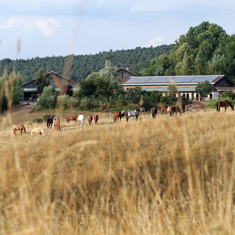 fenwick farm