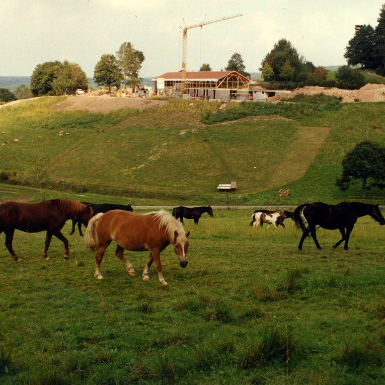 pferde auf der fenwick farm