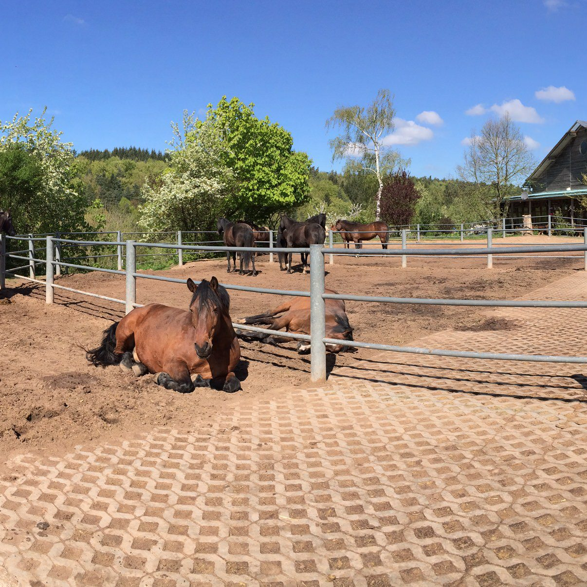 pferdepension auf der fenwick farm
